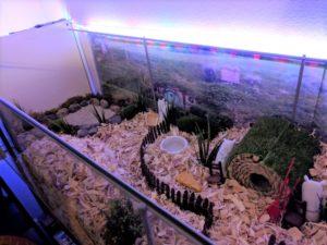 Hobbit Hamster Cage