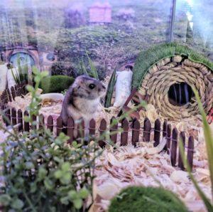 Hobbit Hole Hamster Hideout